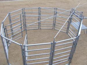 Calf-Races