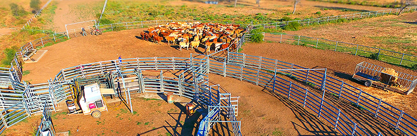 Cattle Yard Building