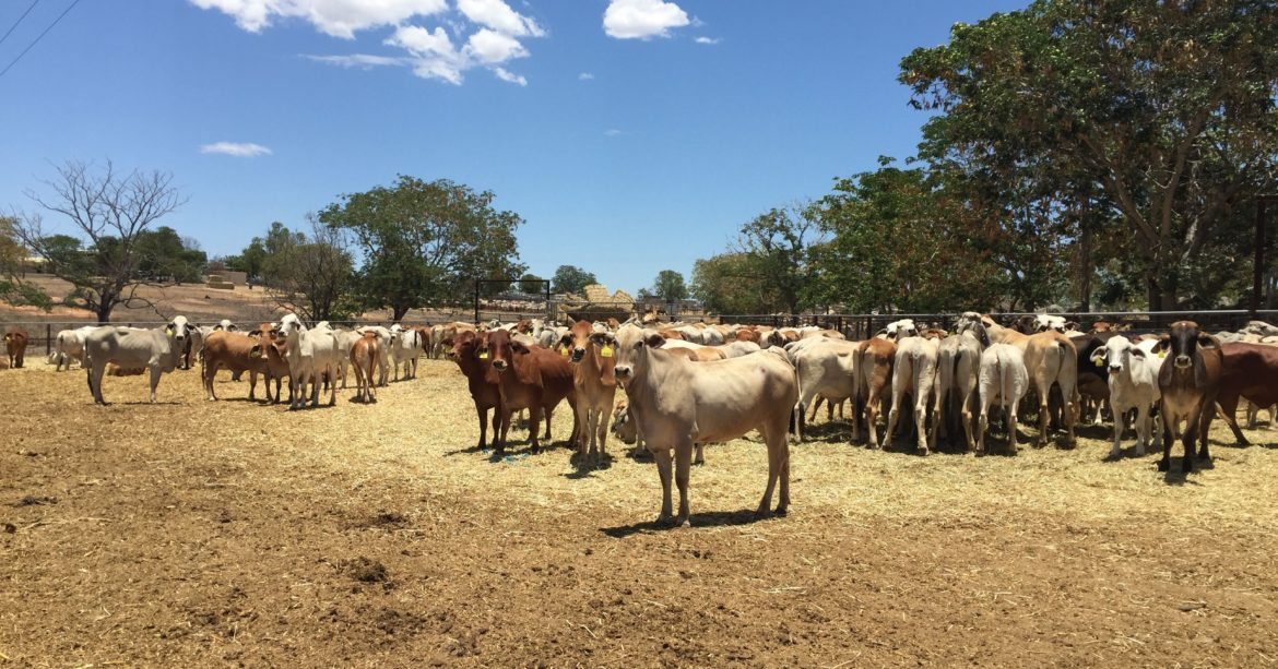 Technology in the cattle industry