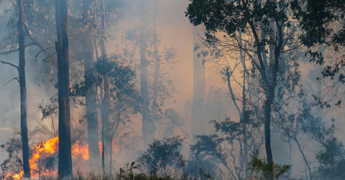 Farmers must take precaution to protect livestock from the threat of bushfire