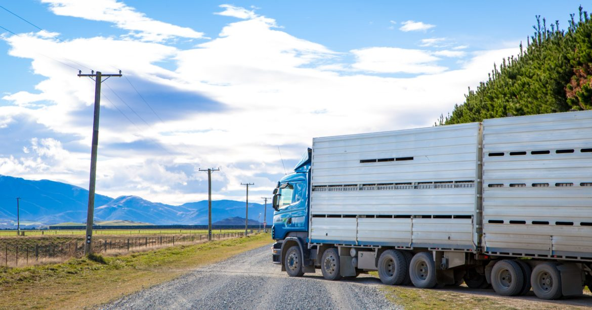 Cattle transport truck leaving a farm on a gravel road