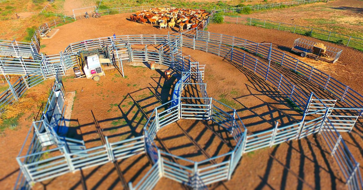 Cattle yard design should be used to increase the safety of your staff and livestock. Designs should also maximise workflow and ease the completion of tasks.
