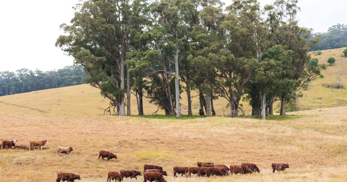 Integrated pest management can protect your pastures so they produce as much healthy grass as possible