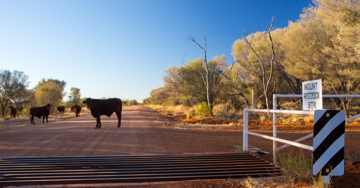 Keeping cows safe on farms requires the right cattle handling equipment