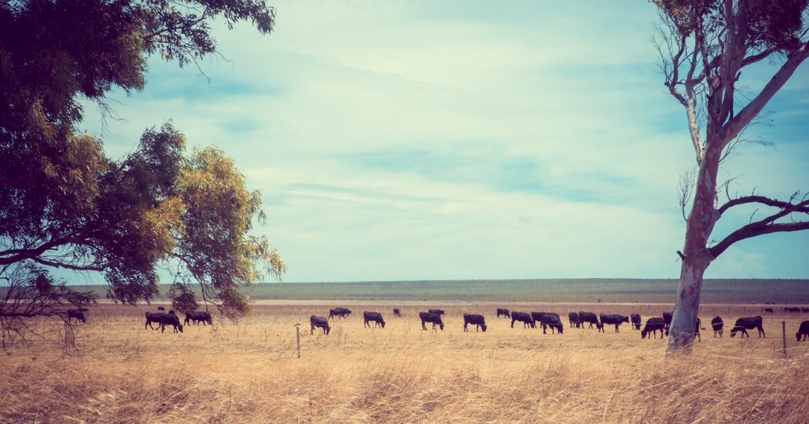Recovering from drought on Australian farms requires planning and preparation