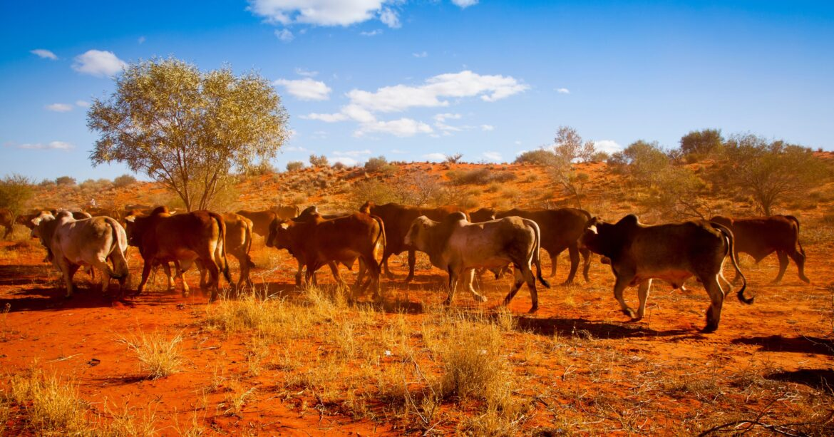 The Australian agriculture sector has persevered through the challenges of COVID