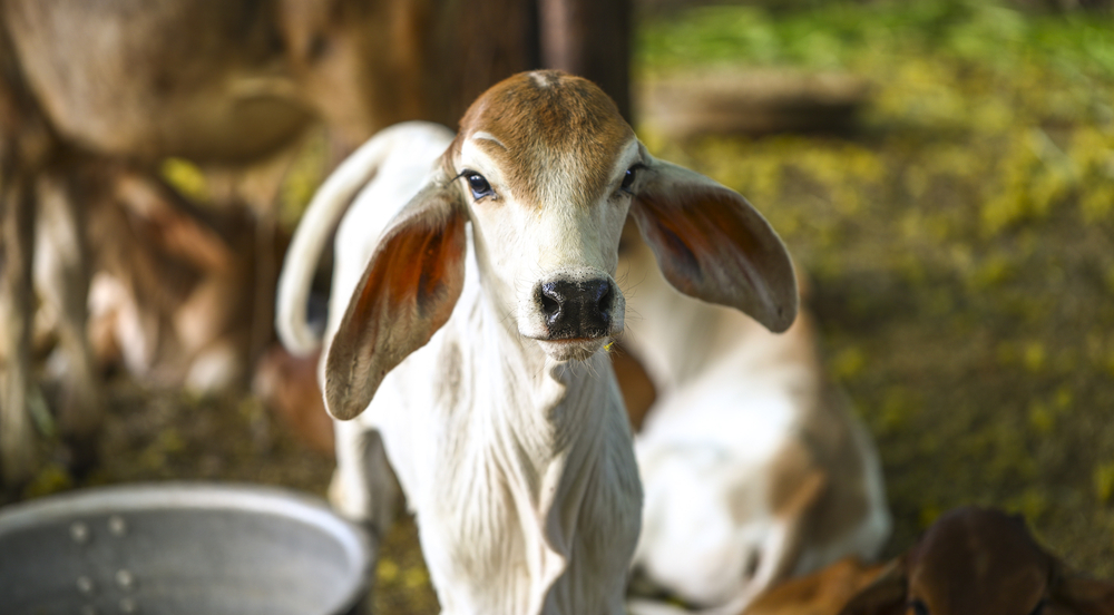 Prepare for the calving season